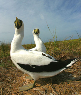 The land areas of the NWHI are resting and nesting areas for over 14 million seabirds. The land areas of the NWHI are resting and nesting areas for over 14 million seabirds.