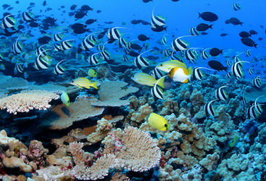 Shallow water coral reefs at French Frigate Shoals. All 4 photos above - Credit: James Watt