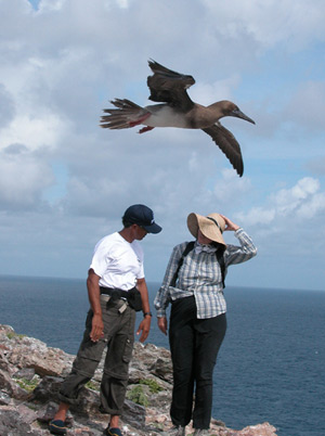 Nainoa Thompson, master navigator for Hokule'a and Dr. Beth Flint of the U.S. Fish and Wildlife Service converse on Mokumanamana as a Brown Booby evesdrops. Credit: Andy Collins