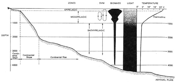 Figure 1. A profile of the oceanic water column, showing some of its characteristic features, including diel (day/night) vertical migrations (DVM). Modified after Herring, 2002.