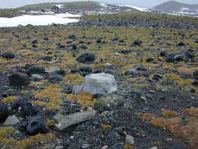 An unusually productive area of the coastline of Antarctica with both antarctic grass and antarctic moss. Notice the whale backbone left by whalers years ago.