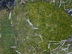 Antarctic grass and antarctic moss are some of the few plants that can survive in Antarctica.